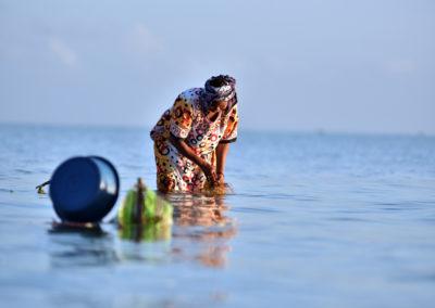 Récolte des algues au milieu de l'océan indien