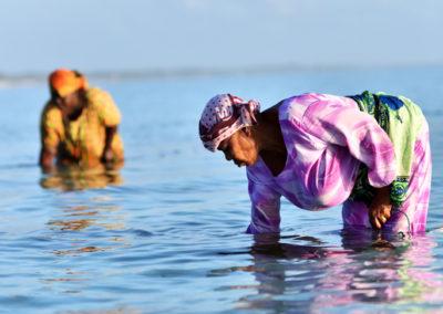 La corde sur laquelle sont fixées les algues est attachée à un bâton dans l'eau